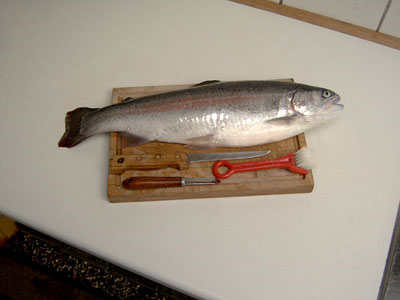 Freshly caught rainbow trout of 1.5 kg to be Gravad